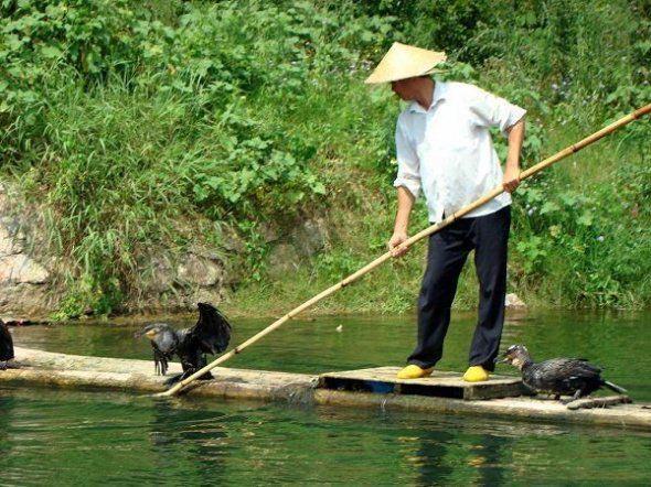Как ловят рыбу в китае видео