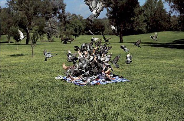 Птицы против всех (47 фотографий), photo:4. Фото 4, Птицы против всех...