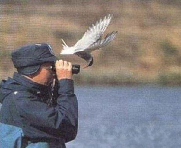 Забавные птички