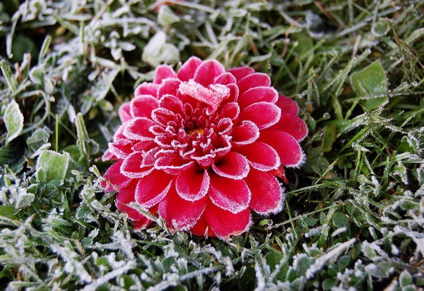 Цветы под инием