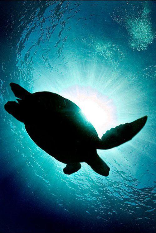 Чарующий мир подводного царства
