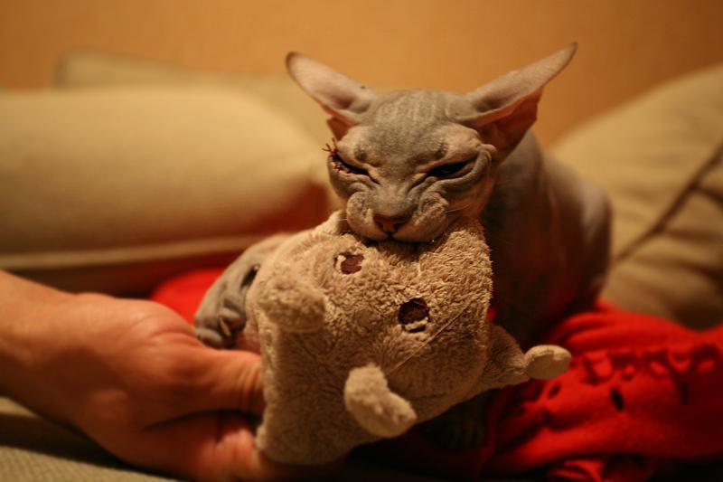Кот с кошечкой в латексе