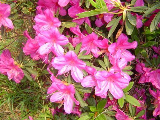 Известные цветы