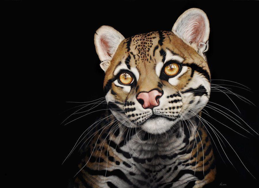 Замечательные портреты семейства кошачьих