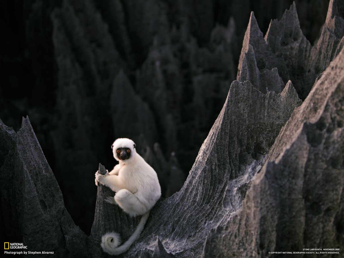 Природа и животные в красивой серии фотографий от National Geographics.