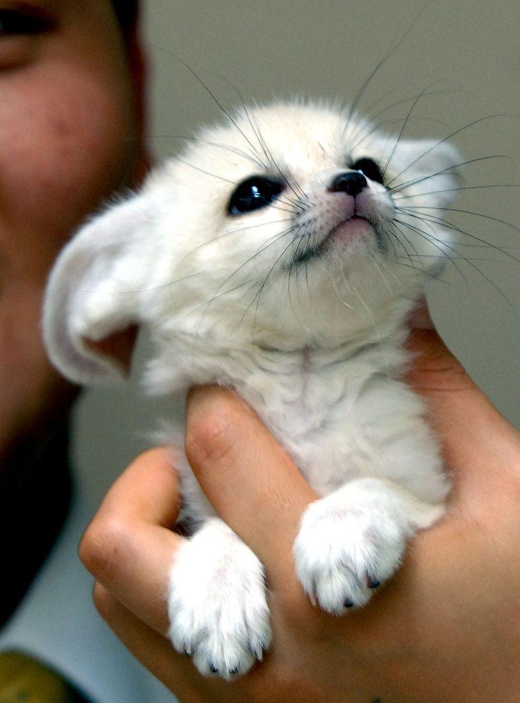 Самое милое животное этих лисиц