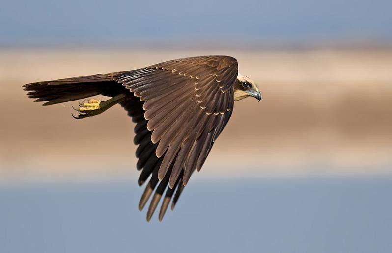Птицы совершают свой воздушный танец