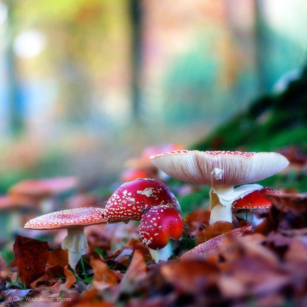 Яркие и красивые фотографии цветов от фотографа под ником Oer-Wout.