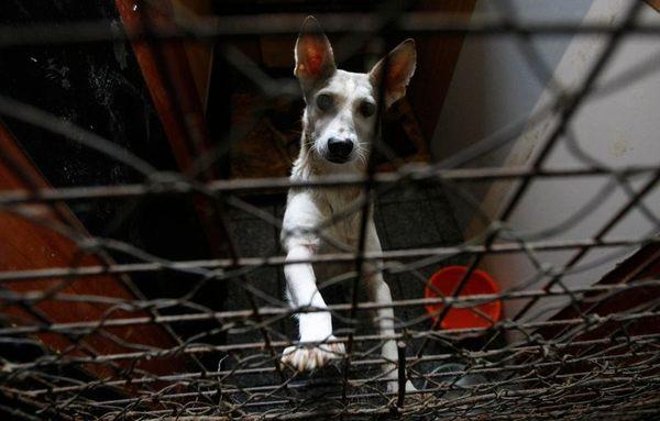 Приют для собак в Киеве