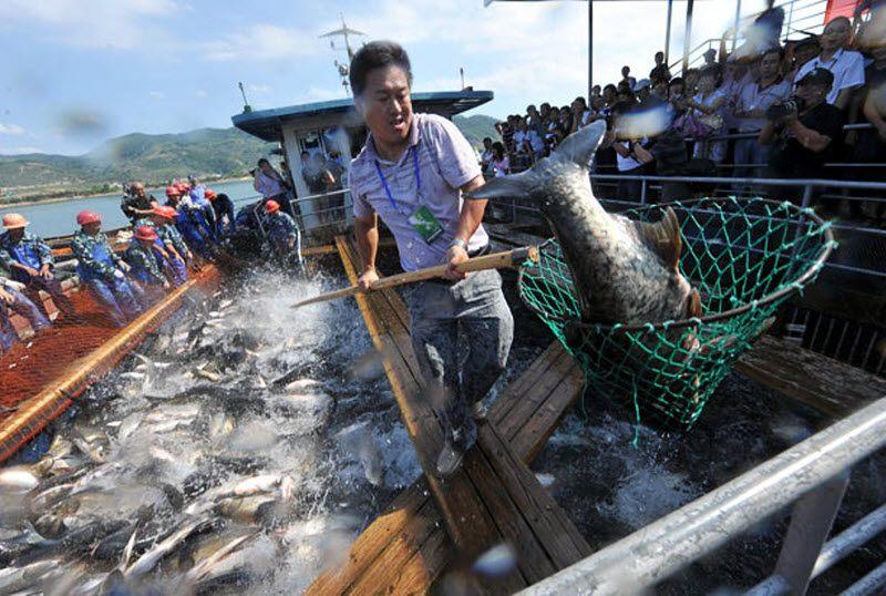 ловля рыбы по китайски видео