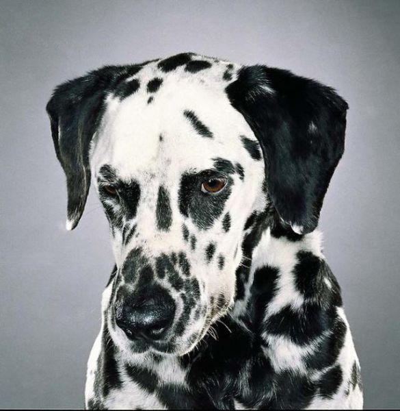 Собачьи портреты