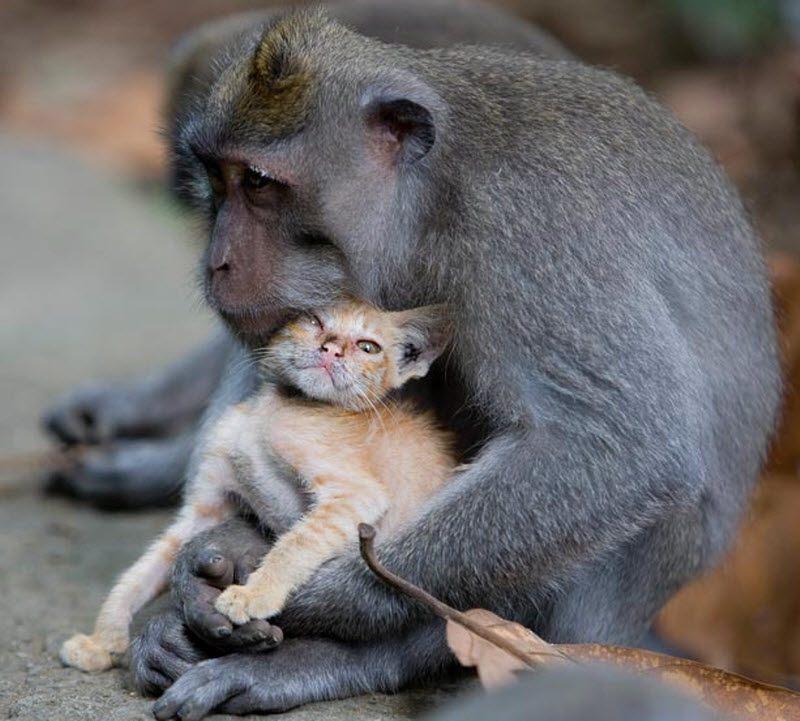 Макака-крабоед, принимающая ванну вместе с мальчиком, стала ...