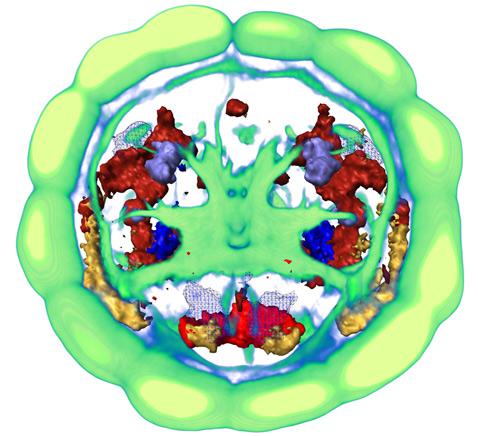 Виртуальное изображение мозга личинки червя, собранное по данным от 36 отдельных экземпляров. При помощи различных цветов на картинку мозга наложена активность отдельных генов (иллюстрации EMBL/R. Tomer).