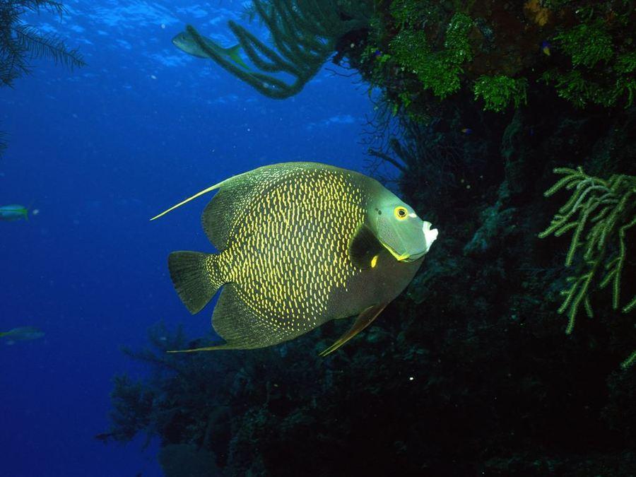 Невероятно красивый мир подводного