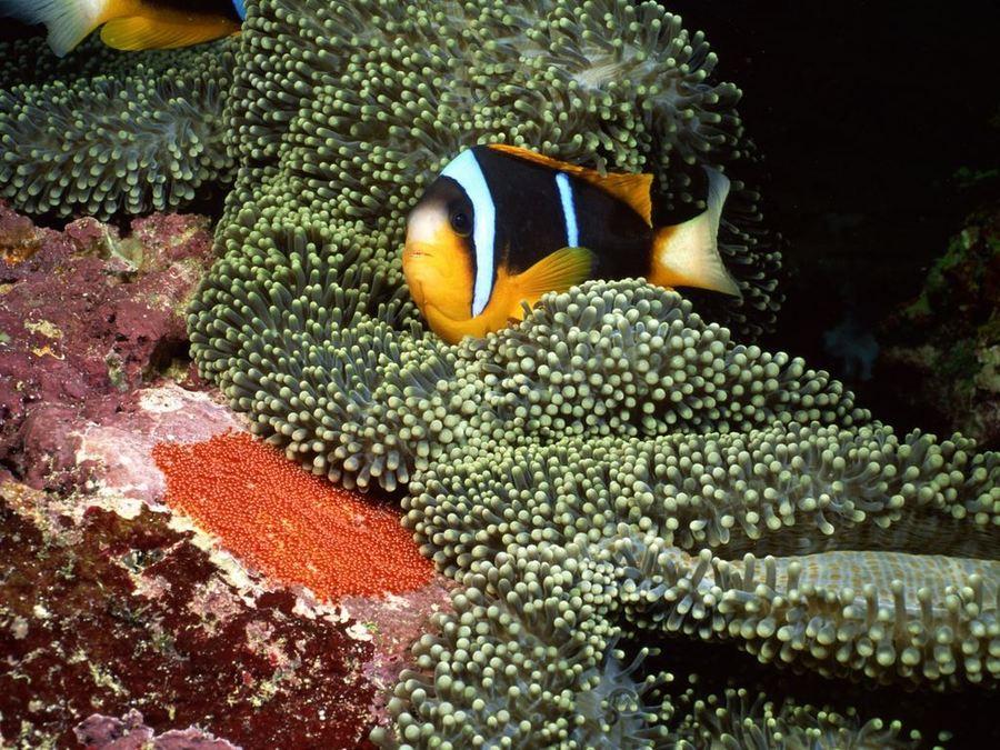 Невероятно красивый мир подводного царства рыб