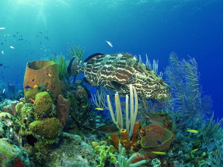 Яркие краски подводного мира