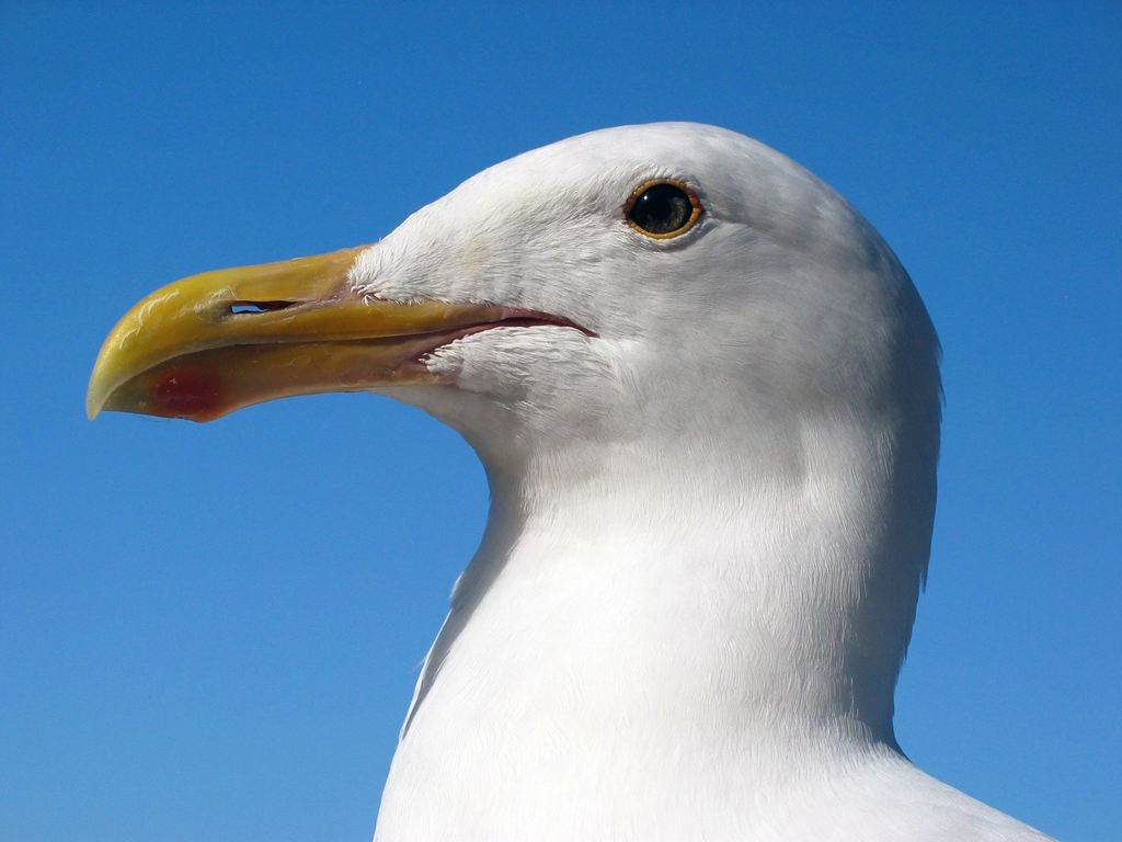 Портреты птиц