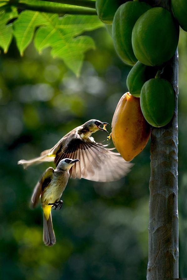 Фотографии животных от Sam Lim