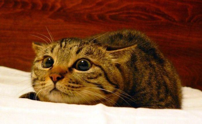 Кошки подобны бездне хвост кошки