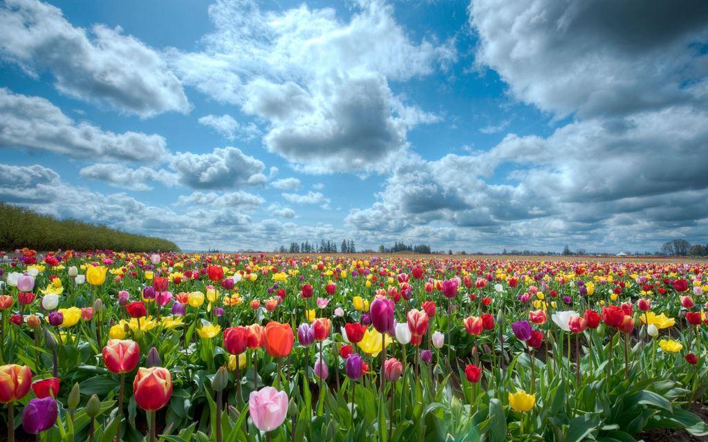 мир цветов картинки: