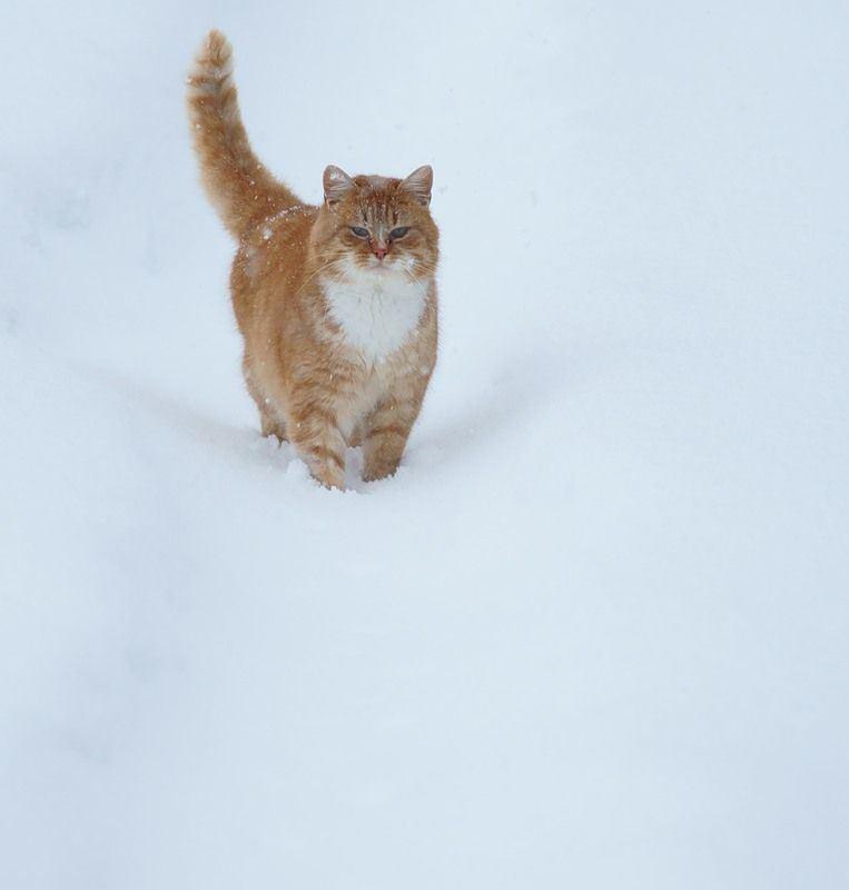 снег.  Бездомный кот.  Теги.  All about cats. зима.  Новости.