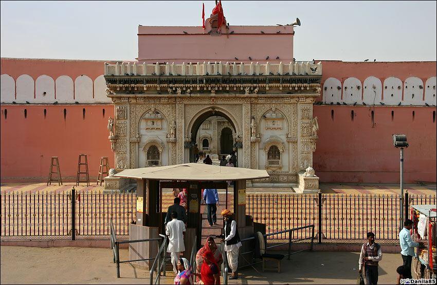 Храм крыс в Деншоке, Индия