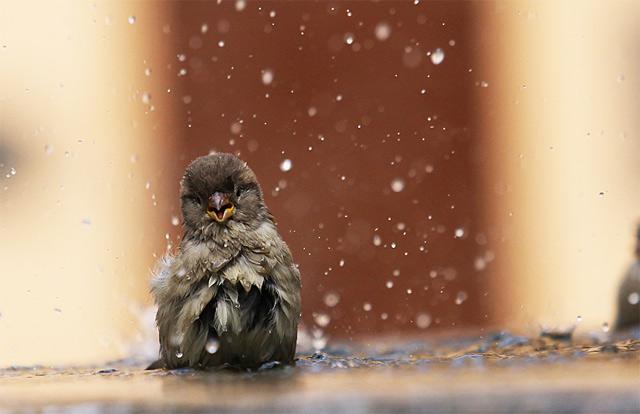 Птицы под дождем