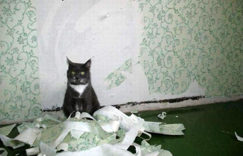прикольные фото кошек с надписями.
