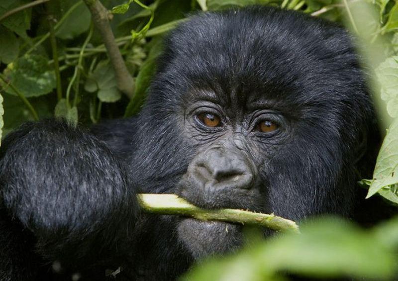Дикая природа Африки в работах Beverly Joubert