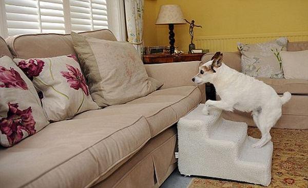Возможно, самая избалованная собака в мире живет в Великобритании Baloven_2