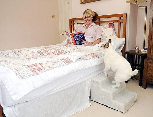 Возможно, самая избалованная собака в мире живет в Великобритании Baloven_4