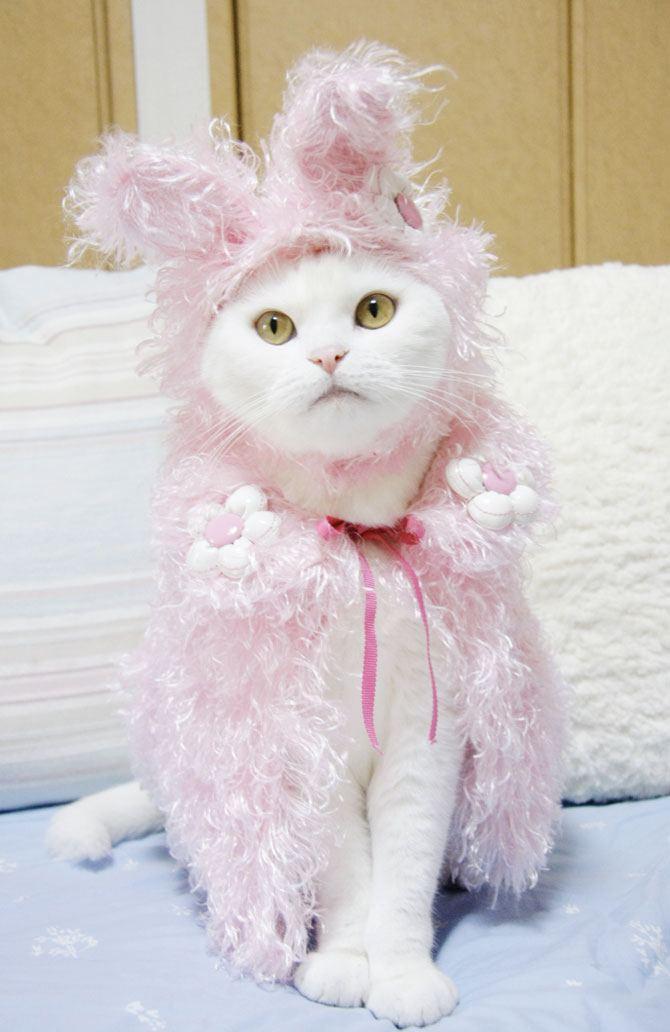 Одежда для кошек от японского кутюрье