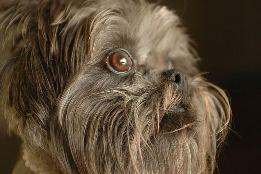 Окрестности эта собака — альпинист