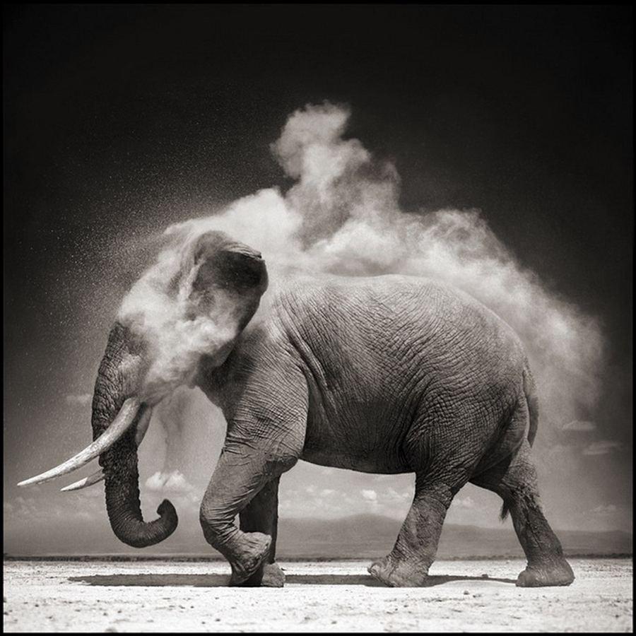 Дикая природа Африки от Ник Брандт (Nick Brand)