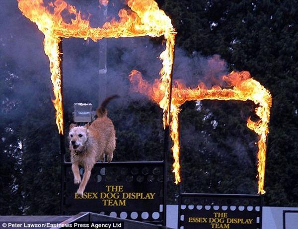 Собаки рекордсмены Dolg_3