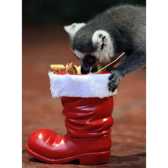 Рождество приходит в зоопарки