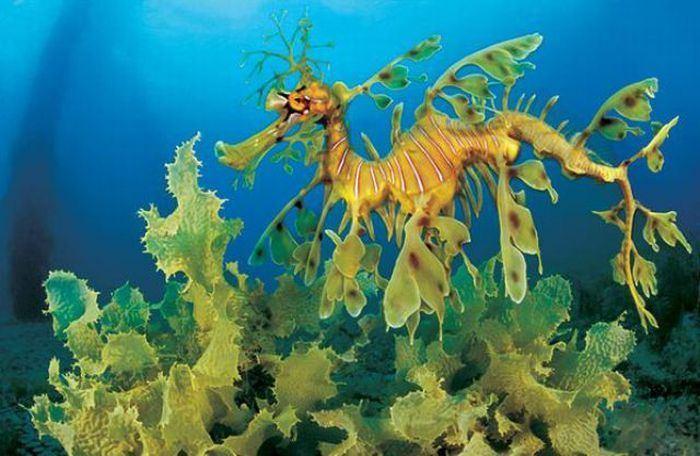 водоросли во время морских