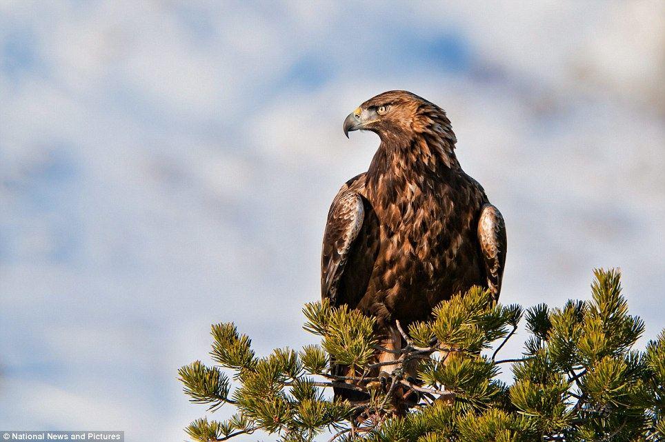 Фото орлана