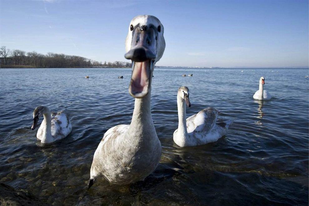 http://animalworld.com.ua/images/2011/February/Foto/Jiv_pl/17/Jiv_pl_13.jpg