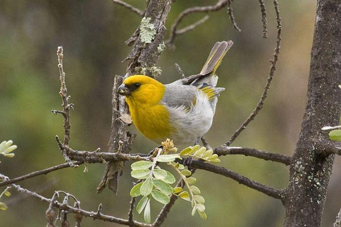http://animalworld.com.ua/images/2011/January/Animals/Birds/Birds_1.jpg
