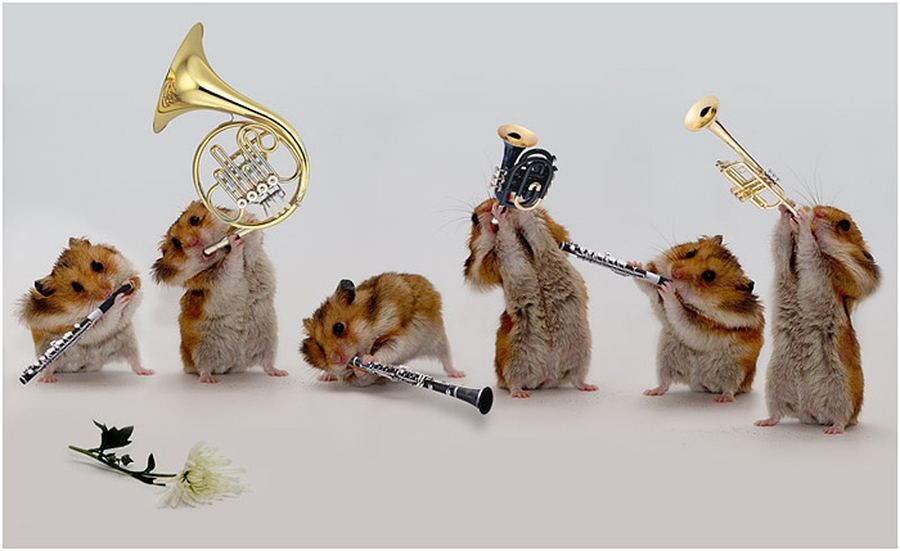 http://animalworld.com.ua/images/2011/January/Animals/Homa/Homa_4.jpg