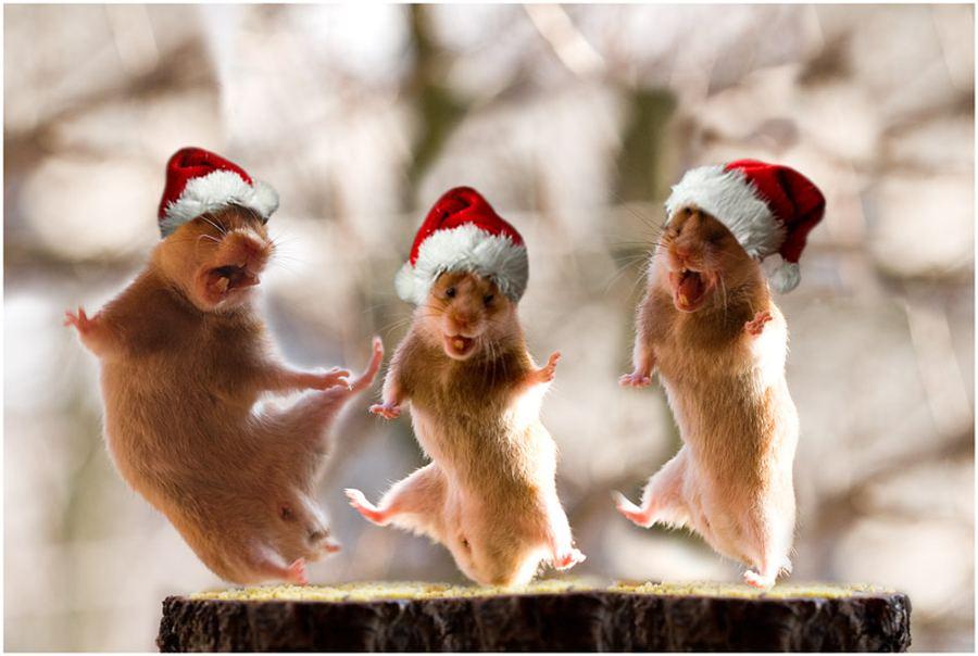 http://animalworld.com.ua/images/2011/January/Animals/Homa/Homa_6.jpg