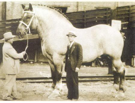 41. Offline. давайте еще когонибуть спалим я вот фотку коня в молодости нашел.  Дата: Четверг, 06.12.2012, 21:15...