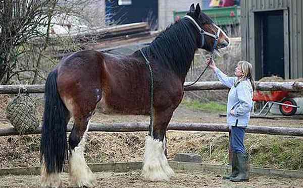 Фото лошади самой большой