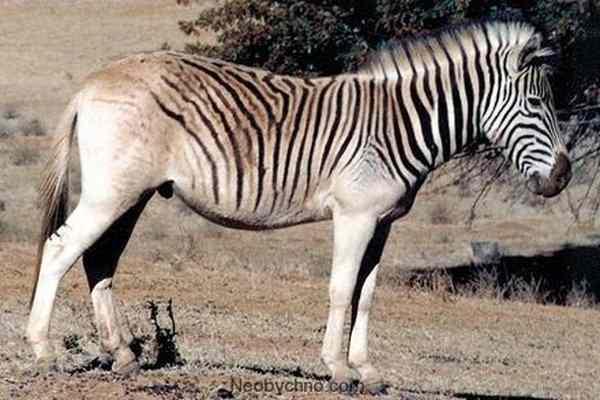 Доклад на тему исчезнувшие виды животных 988