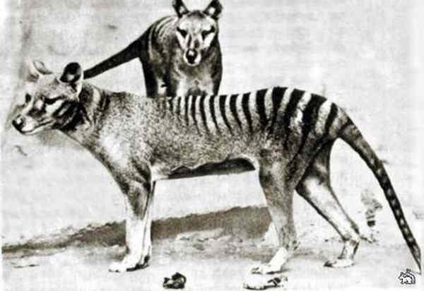 Вымершие виды животных доклад 6271