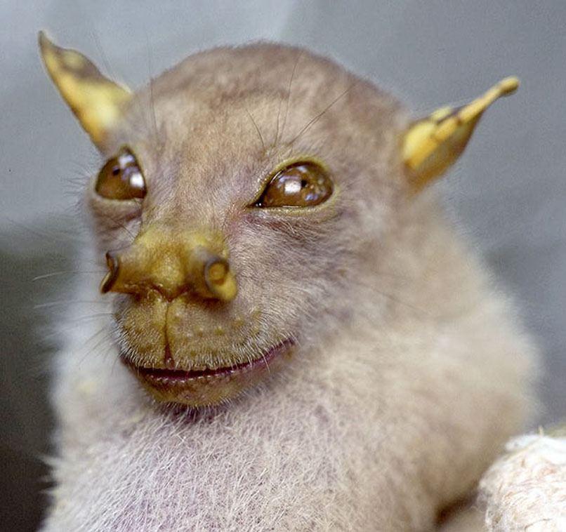 фото необычных зверей