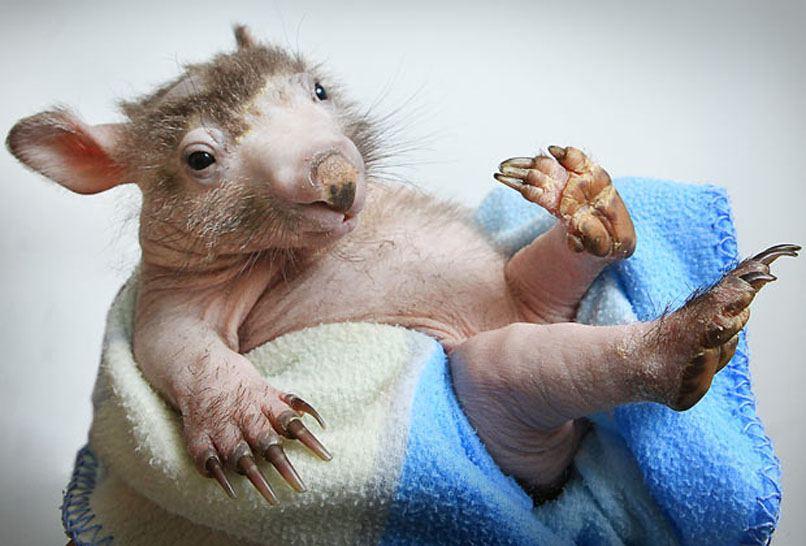 Самые необычные фотографии животных по версии The Telegraph