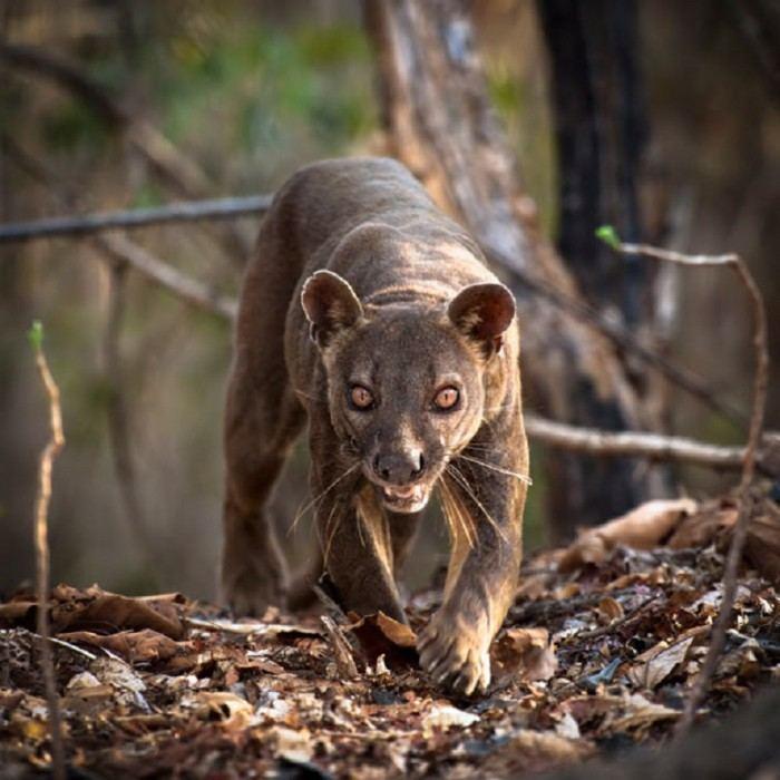Дикая природа острова Мадагаскар