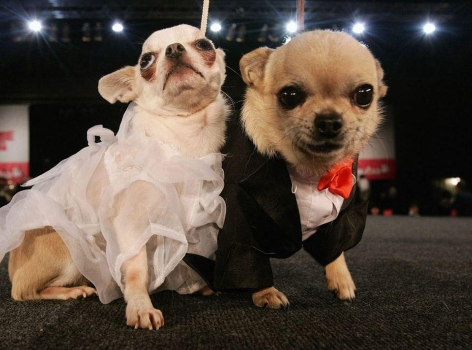 Собаки в карнавальных костюмах